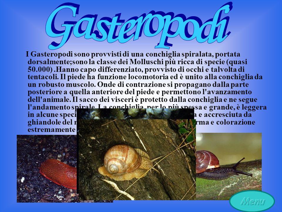 I Gasteropodi sono provvisti di una conchiglia spiralata, portata dorsalmente;sono la classe dei Molluschi più ricca di specie (quasi 50.000).Hanno capo differenziato, provvisto di occhi e talvolta di tentacoli.