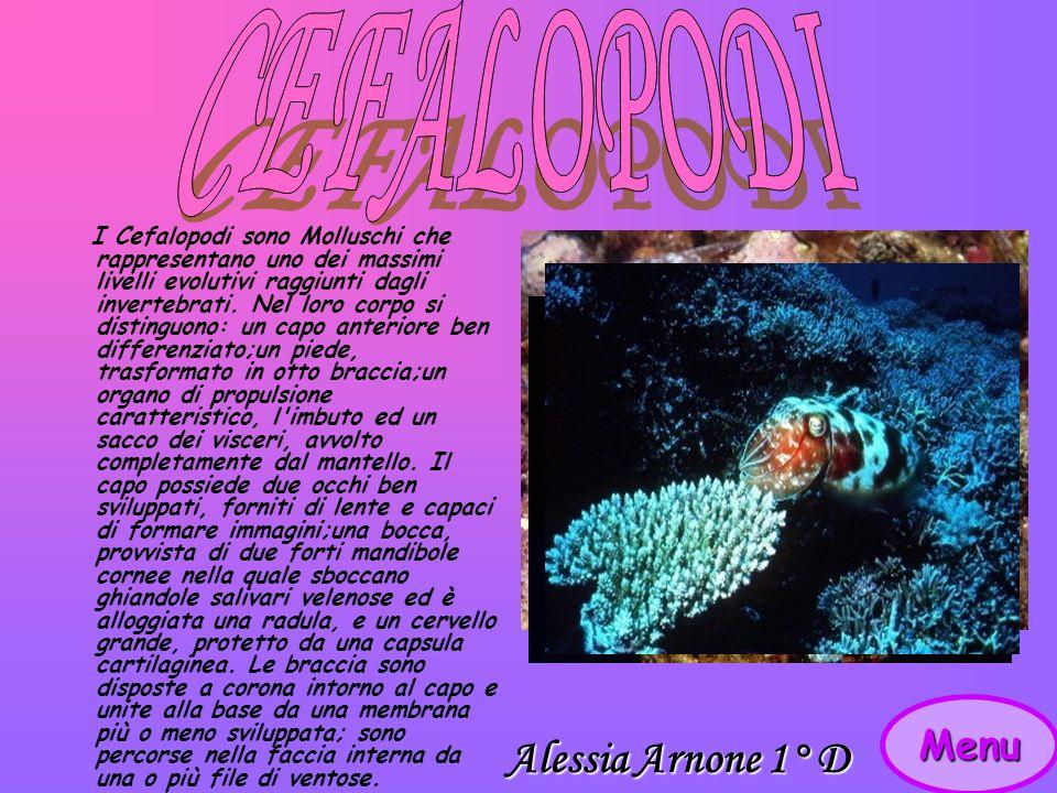 Menu I Cefalopodi sono Molluschi che rappresentano uno dei massimi livelli evolutivi raggiunti dagli invertebrati.