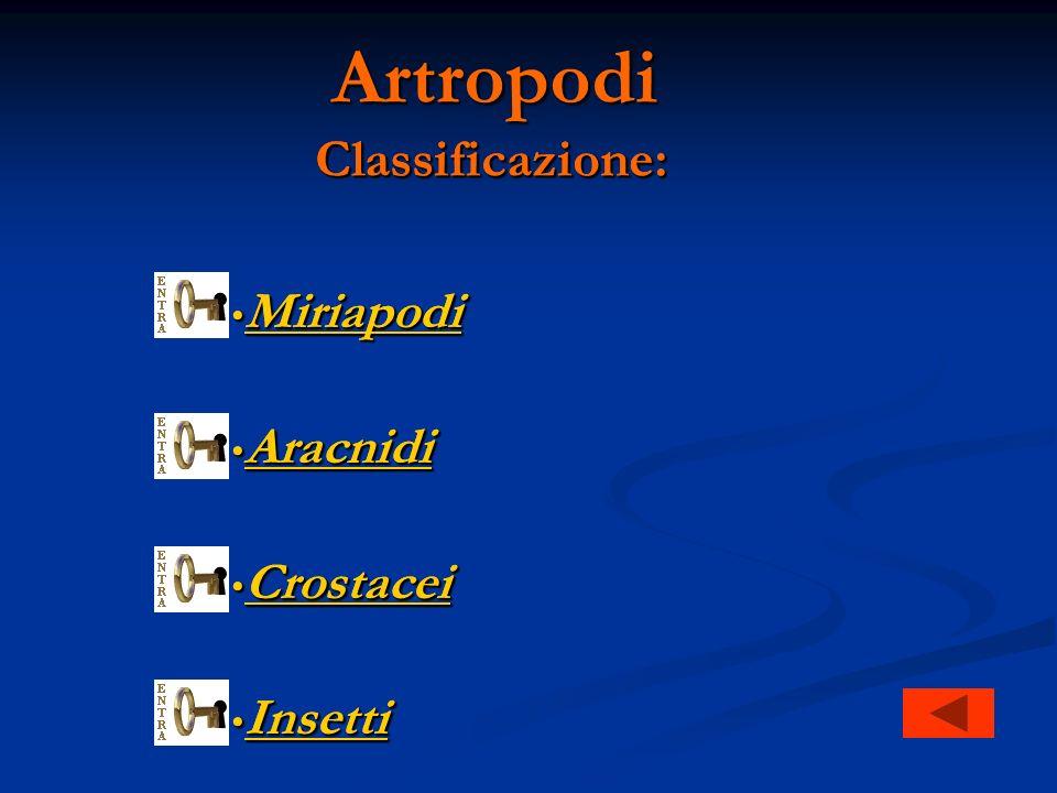 Artropodi Classificazione: Miriapodi Miriapodi Miriapodi Aracnidi Aracnidi Aracnidi Crostacei Crostacei Crostacei Insetti Insetti Insetti Classificazione: Miriapodi Miriapodi Miriapodi Aracnidi Aracnidi Aracnidi Crostacei Crostacei Crostacei Insetti Insetti Insetti