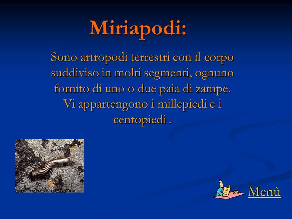 Miriapodi: Sono artropodi terrestri con il corpo suddiviso in molti segmenti, ognuno fornito di uno o due paia di zampe.