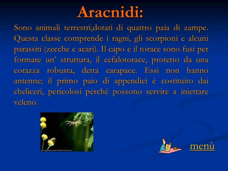 Aracnidi: Sono animali terrestri,dotati di quattro paia di zampe.