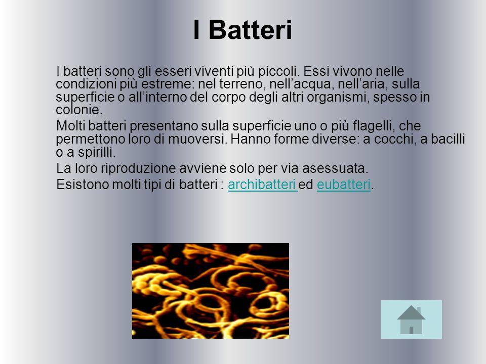 I Batteri I batteri sono gli esseri viventi più piccoli. Essi vivono nelle condizioni più estreme: nel terreno, nellacqua, nellaria, sulla superficie