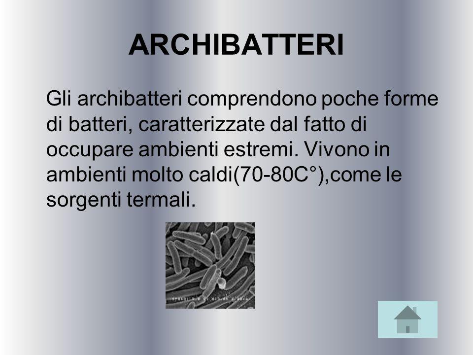 ARCHIBATTERI Gli archibatteri comprendono poche forme di batteri, caratterizzate dal fatto di occupare ambienti estremi. Vivono in ambienti molto cald