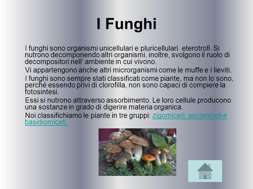 I Funghi I funghi sono organismi unicellulari e pluricellulari eterotrofi. Si nutrono decomponendo altri organismi, inoltre, svolgono il ruolo di deco