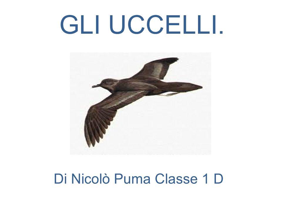 GLI UCCELLI. Di Nicolò Puma Classe 1 D