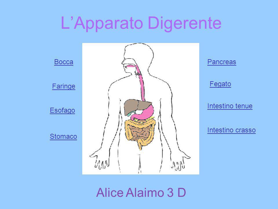 LApparato Digerente Fegato Intestino crasso Faringe Bocca Esofago Stomaco Pancreas Intestino tenue Alice Alaimo 3 D