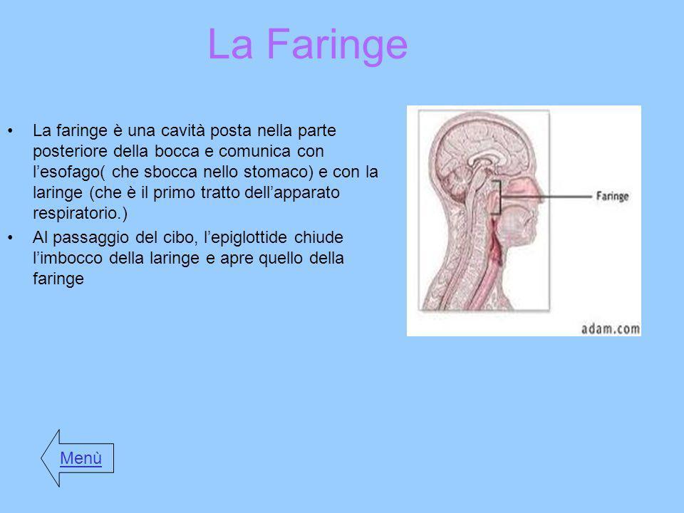 La Faringe La faringe è una cavità posta nella parte posteriore della bocca e comunica con lesofago( che sbocca nello stomaco) e con la laringe (che è