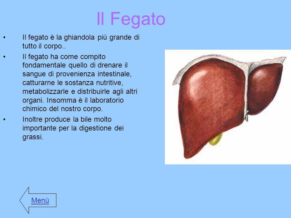 Il Fegato Il fegato è la ghiandola più grande di tutto il corpo.. Il fegato ha come compito fondamentale quello di drenare il sangue di provenienza in