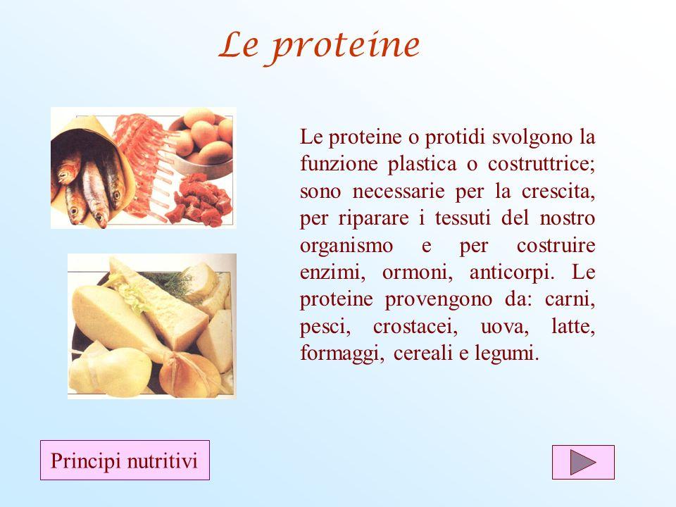 Le proteine Le proteine o protidi svolgono la funzione plastica o costruttrice; sono necessarie per la crescita, per riparare i tessuti del nostro org