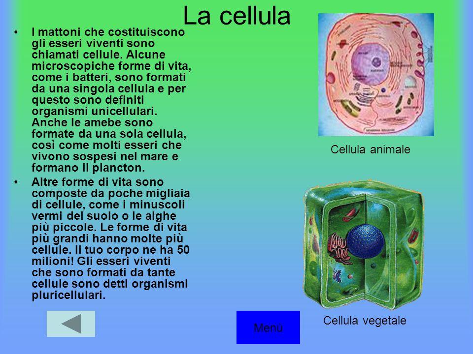 La cellula I mattoni che costituiscono gli esseri viventi sono chiamati cellule.