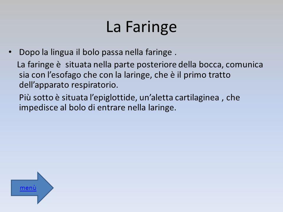 La Faringe Dopo la lingua il bolo passa nella faringe.