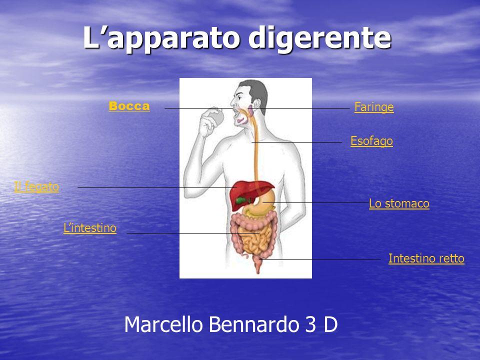 Lapparato digerente Bocca Esofago Lo stomaco Lintestino Faringe Il fegato Intestino retto Marcello Bennardo 3 D