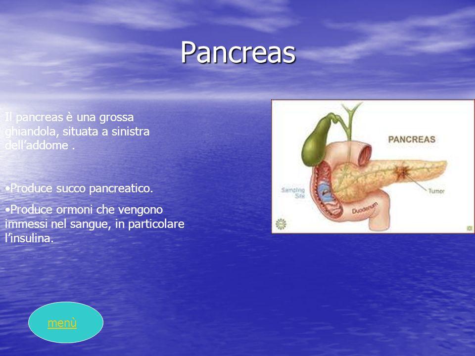 Pancreas Il pancreas è una grossa ghiandola, situata a sinistra delladdome. Produce succo pancreatico. Produce ormoni che vengono immessi nel sangue,