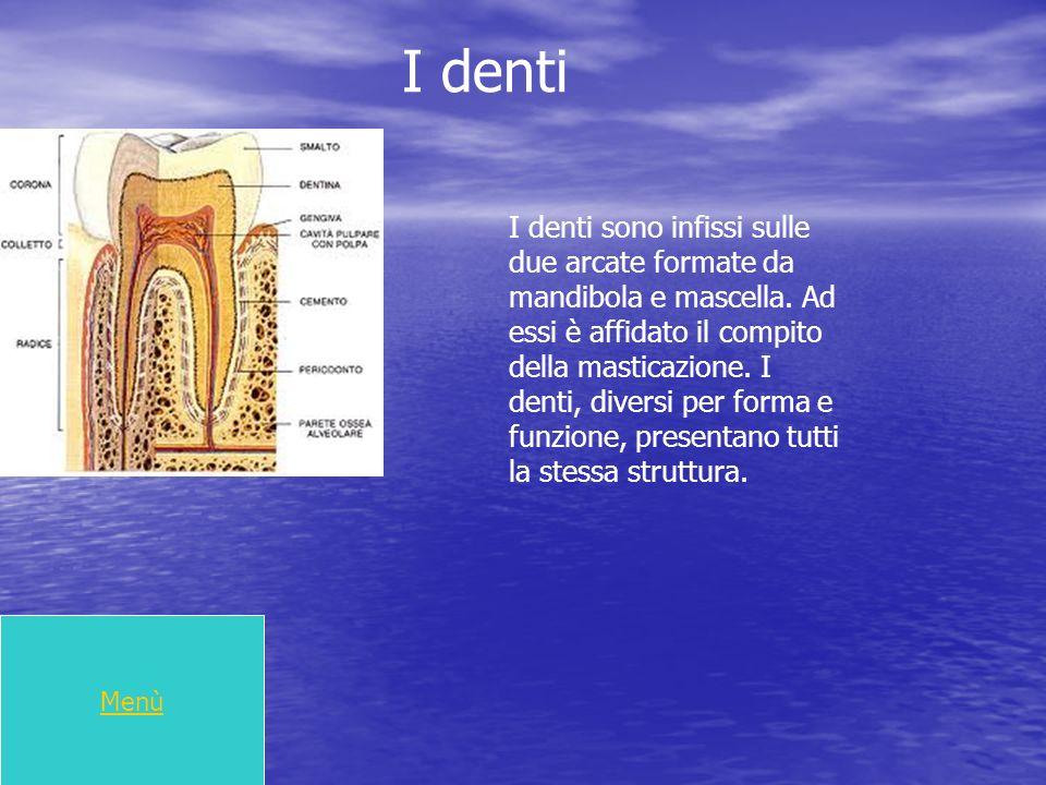 I denti Menù I denti sono infissi sulle due arcate formate da mandibola e mascella. Ad essi è affidato il compito della masticazione. I denti, diversi