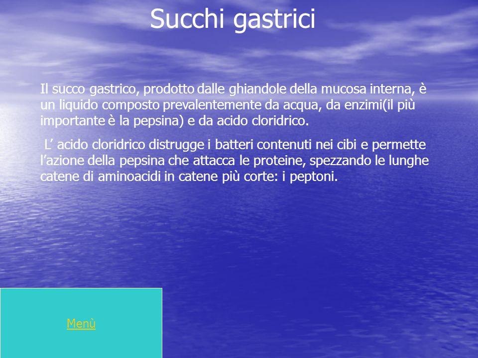 Succhi gastrici Il succo gastrico, prodotto dalle ghiandole della mucosa interna, è un liquido composto prevalentemente da acqua, da enzimi(il più imp