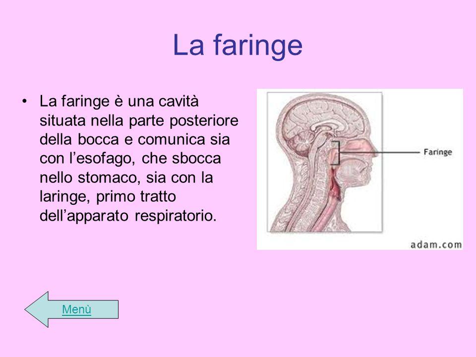 La faringe La faringe è una cavità situata nella parte posteriore della bocca e comunica sia con lesofago, che sbocca nello stomaco, sia con la laring