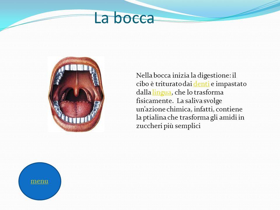 La bocca Nella bocca inizia la digestione: il cibo è triturato dai denti e impastato dalla lingua, che lo trasforma fisicamente. La saliva svolge unaz