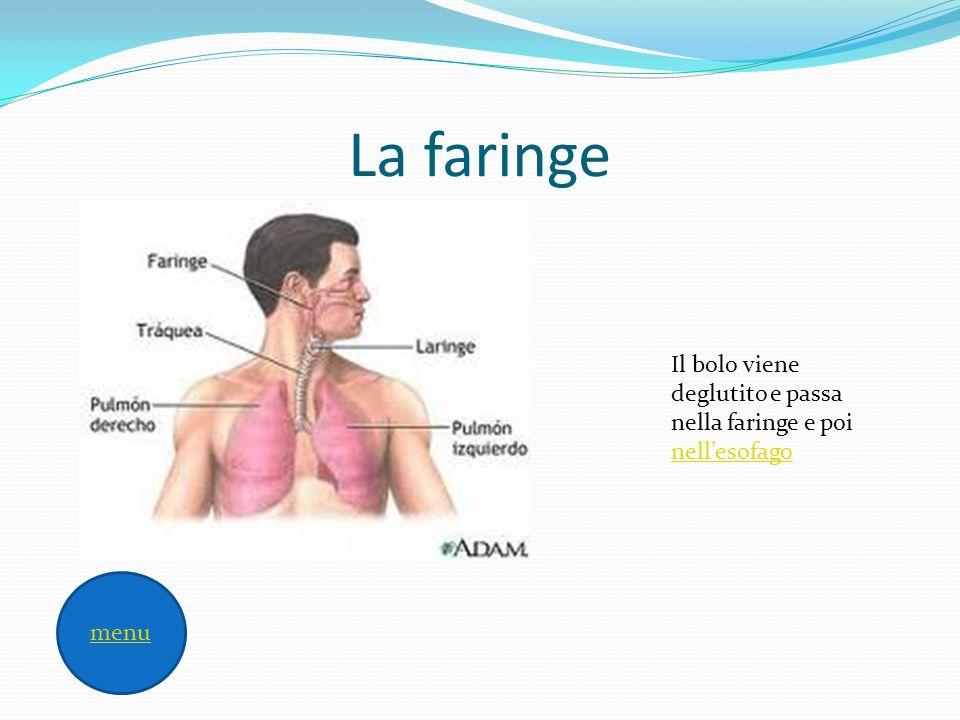 esofago Lesofago secerne muco con funzione lubrificante e regola il passaggio del cibo tramite movimenti, chiamati peristaltici faringe menu