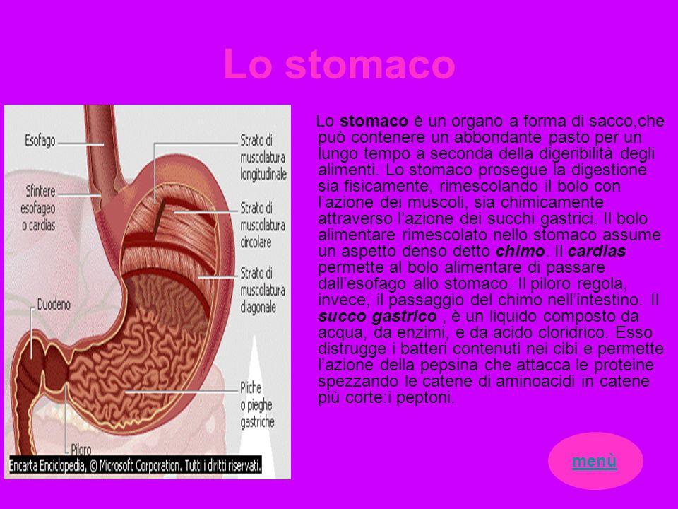 Lo stomaco Lo stomaco è un organo a forma di sacco,che può contenere un abbondante pasto per un lungo tempo a seconda della digeribilità degli aliment