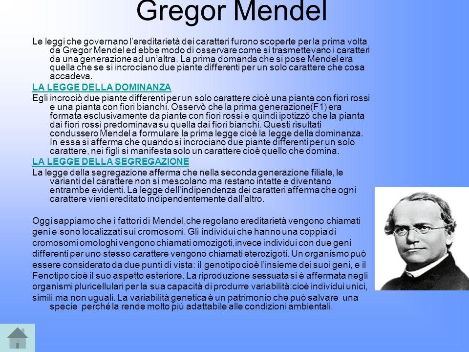 Gregor Mendel Le leggi che governano lereditarietà dei caratteri furono scoperte per la prima volta da Gregor Mendel ed ebbe modo di osservare come si