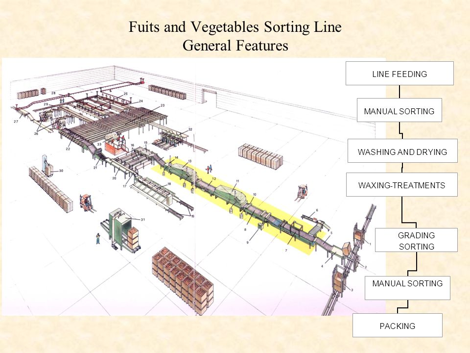 Fuits and Vegetables Sorting Line General Features LINE FEEDING MANUAL SORTING WASHING AND DRYING WAXING- TREATMENTS GRADING SORTING MANUAL SORTING PA