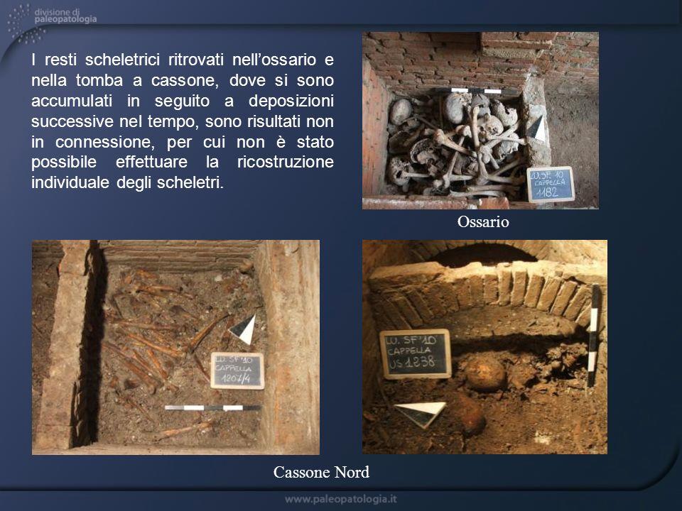 Cassone Nord Ossario I resti scheletrici ritrovati nellossario e nella tomba a cassone, dove si sono accumulati in seguito a deposizioni successive ne