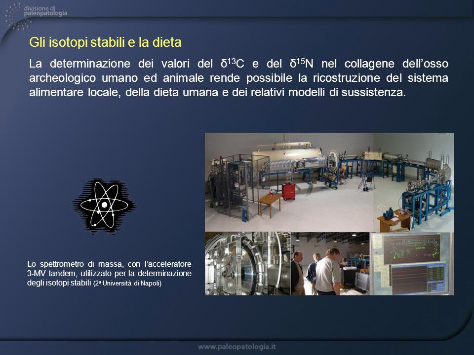 Gli isotopi stabili e la dieta La determinazione dei valori del δ 13 C e del δ 15 N nel collagene dellosso archeologico umano ed animale rende possibi