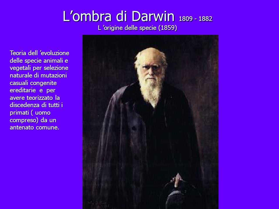 Lombra di Darwin 1809 - 1882 L origine delle specie (1859) Teoria dell evoluzione delle specie animali e vegetali per selezione naturale di mutazioni