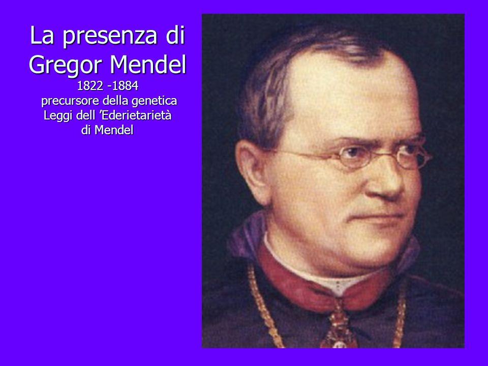 La presenza di Gregor Mendel 1822 -1884 precursore della genetica Leggi dell Ederietarietà di Mendel