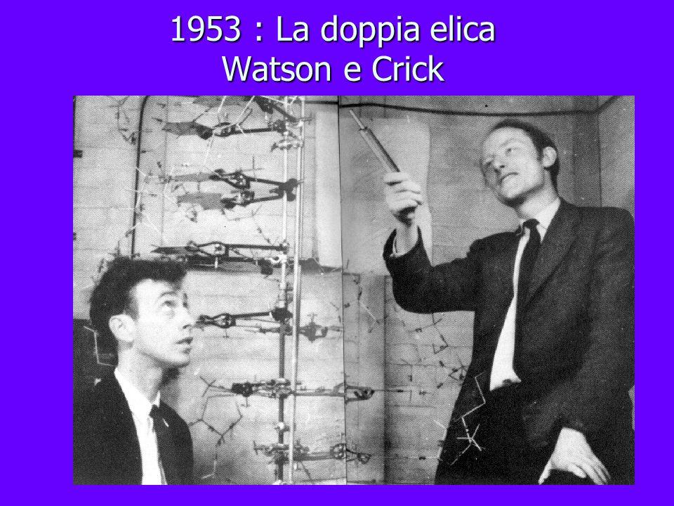 1953 : La doppia elica Watson e Crick