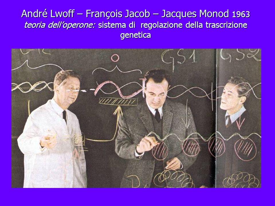 André Lwoff – François Jacob – Jacques Monod 1963 teoria delloperone: sistema di regolazione della trascrizione genetica