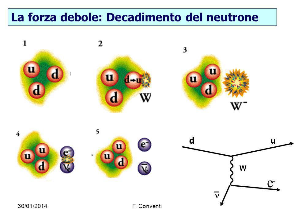 30/01/2014F. Conventi La forza debole: Decadimento del neutrone W e - du