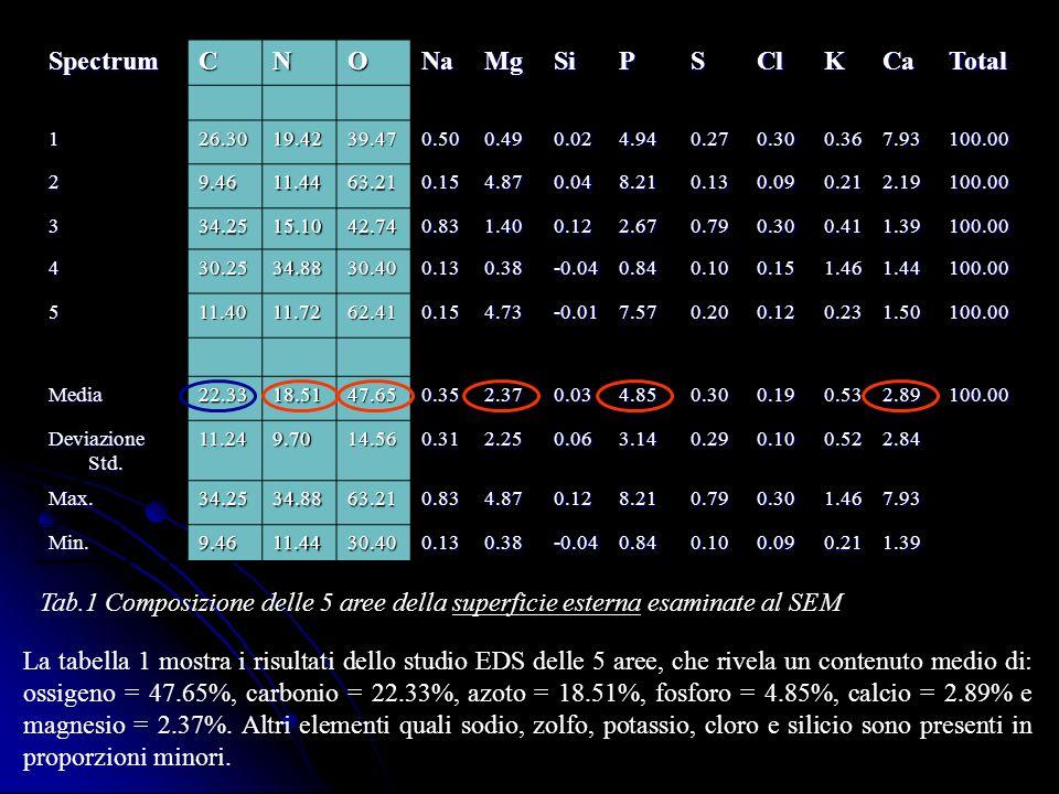 Tab.1 Composizione delle 5 aree della superficie esterna esaminate al SEM SpectrumCNONaMgSiPSClKCaTotal 126.3019.4239.470.500.490.024.940.270.300.367.