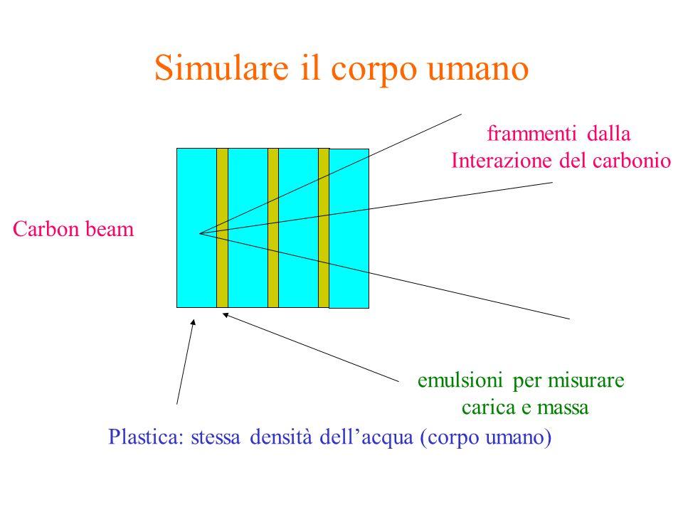 Simulare il corpo umano Carbon beam Plastica: stessa densità dellacqua (corpo umano) emulsioni per misurare carica e massa frammenti dalla Interazione