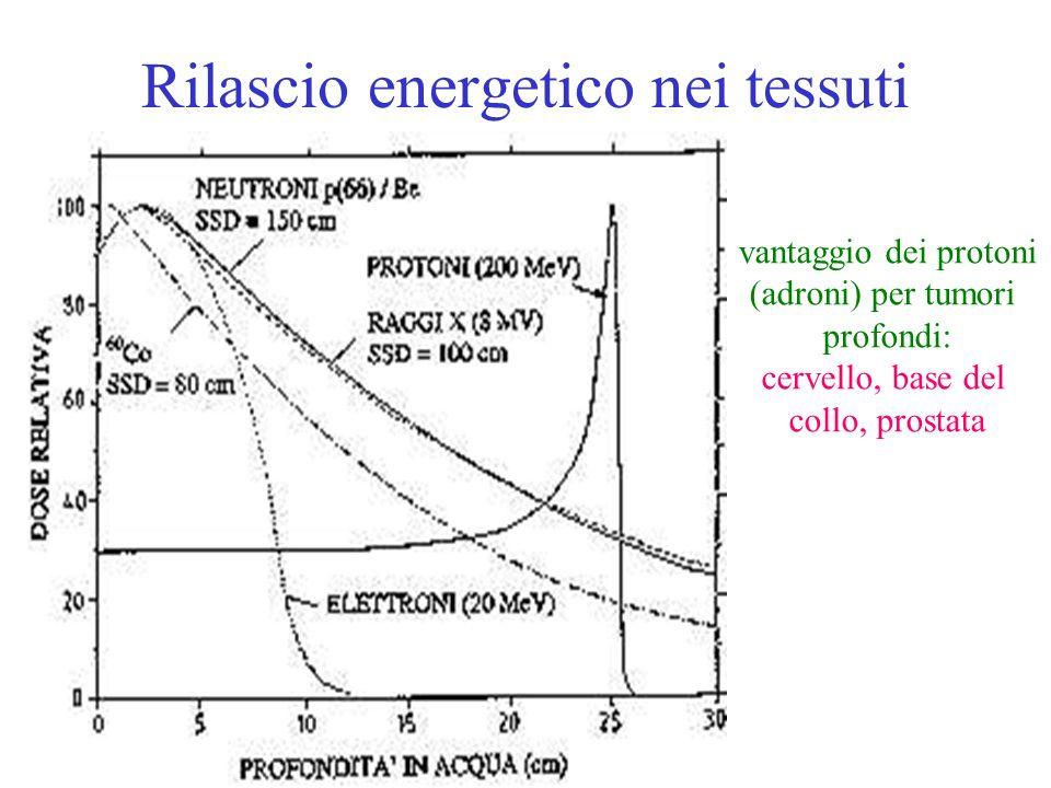 Rilascio energetico nei tessuti vantaggio dei protoni (adroni) per tumori profondi: cervello, base del collo, prostata