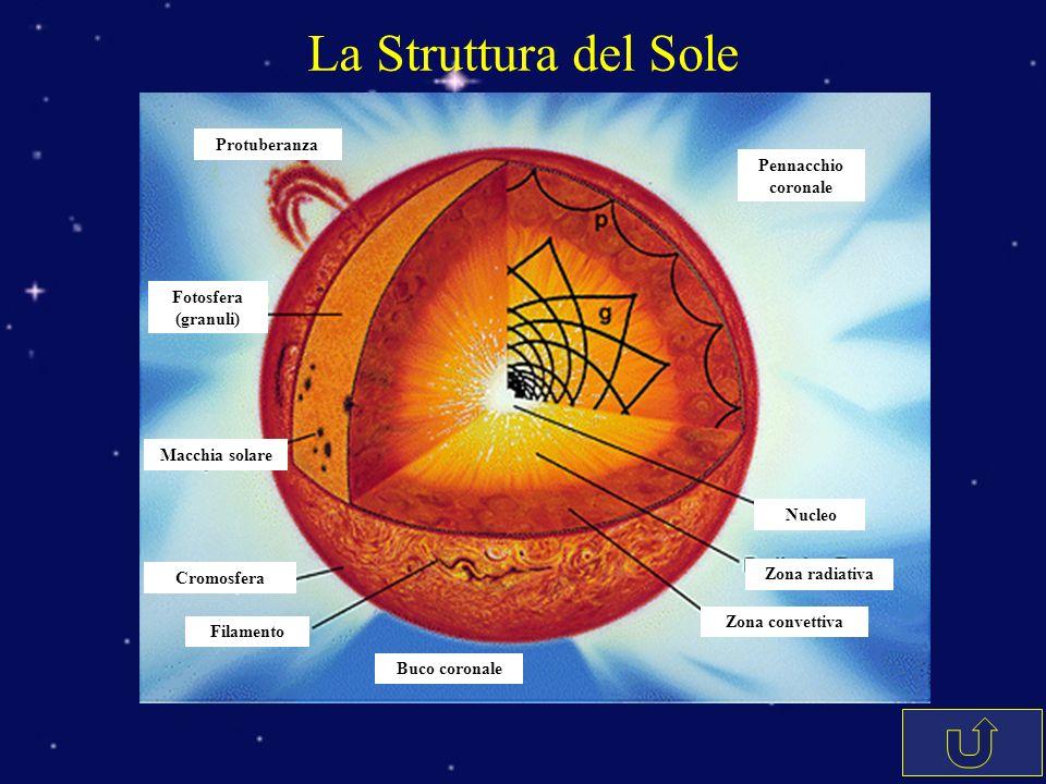 La Struttura del Sole Protuberanza Fotosfera (granuli) Macchia solare Cromosfera Filamento Buco coronale Pennacchio coronale Nucleo Zona radiativa Zon