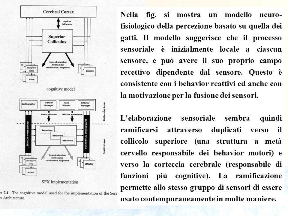 55 Nella fig. si mostra un modello neuro- fisiologico della percezione basato su quella dei gatti. Il modello suggerisce che il processo sensoriale è
