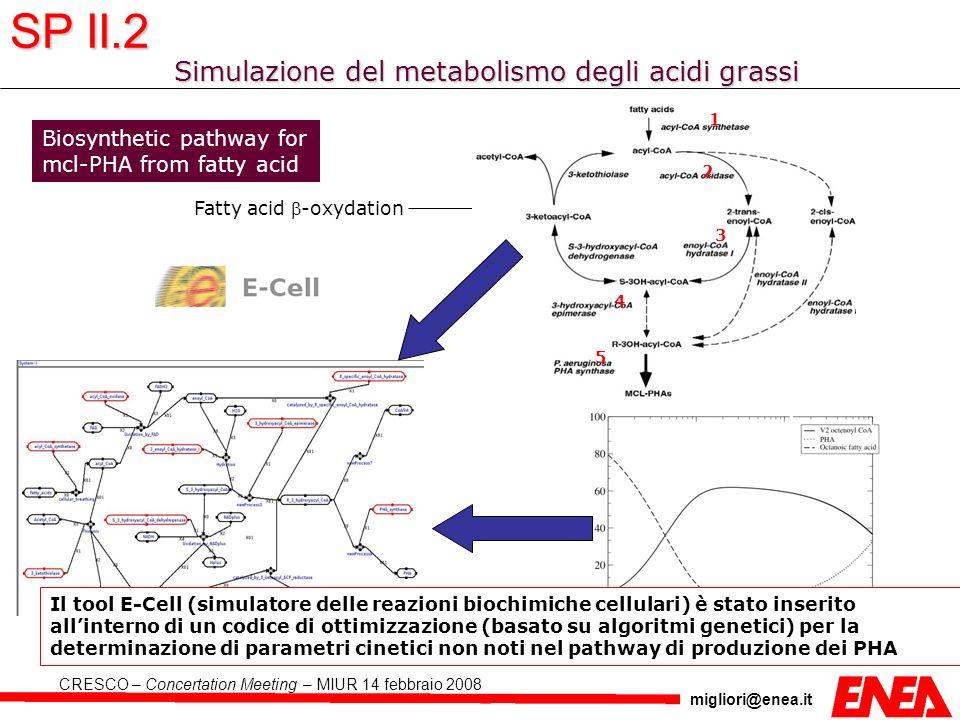 migliori@enea.it CRESCO – Concertation Meeting – MIUR 14 febbraio 2008 Simulazione del metabolismo degli acidi grassi Biosynthetic pathway for mcl-PHA