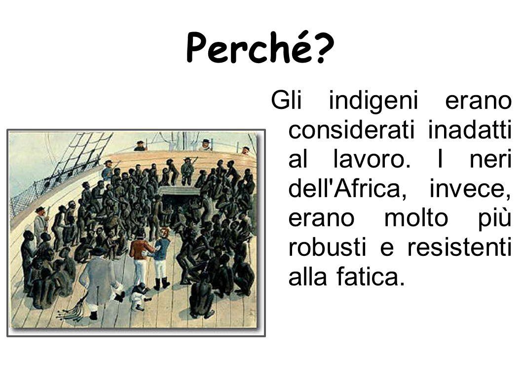 Perché? Gli indigeni erano considerati inadatti al lavoro. I neri dell'Africa, invece, erano molto più robusti e resistenti alla fatica.