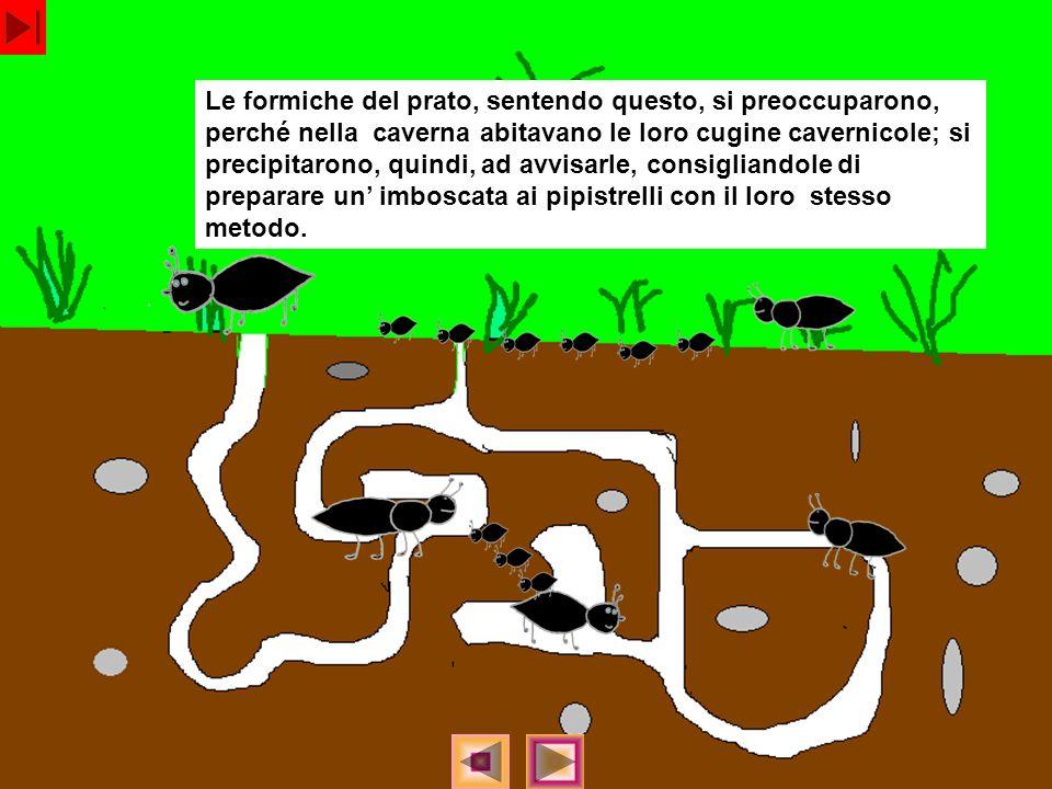Le formiche del prato, sentendo questo, si preoccuparono, perché nella caverna abitavano le loro cugine cavernicole; si precipitarono, quindi, ad avvi