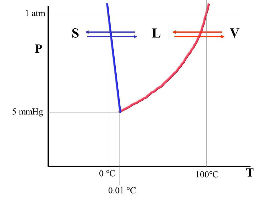 L VS 100°C 1 atm 5 mmHg 0 °C 0.01 °C T P