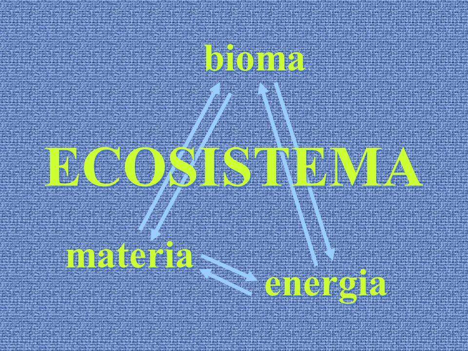 materia energia bioma ECOSISTEMA