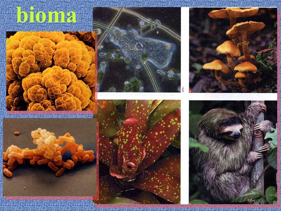Ecosistema - BIOMA: DOMINI Albero filogenetico della vita Ecosistema - BIOMA: DOMINI Albero filogenetico della vita