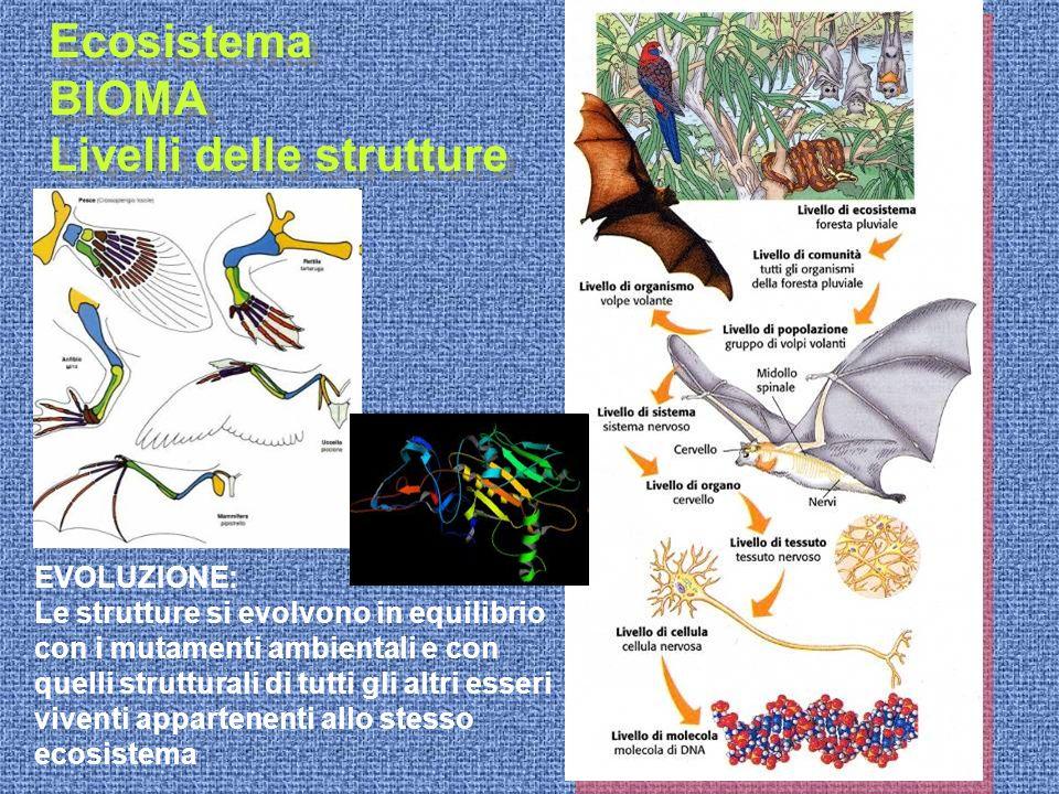 Ecosistema BIOMA Livelli delle strutture Ecosistema BIOMA Livelli delle strutture EVOLUZIONE: Le strutture si evolvono in equilibrio con i mutamenti a