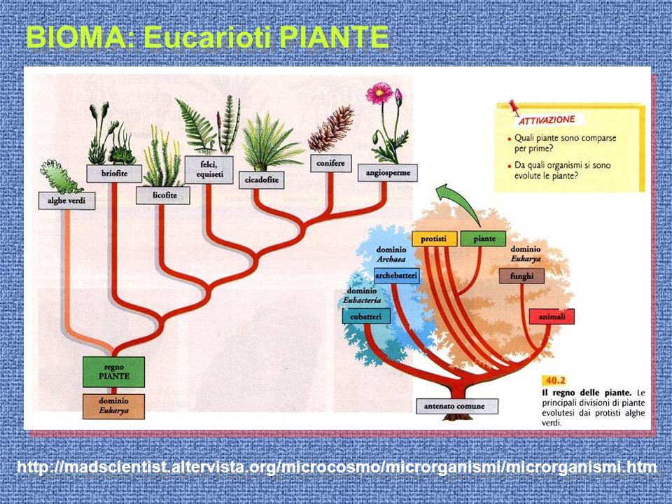 http://madscientist.altervista.org/microcosmo/microrganismi/microrganismi.htm BIOMA: Eucarioti PIANTE