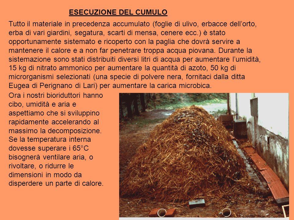 ESECUZIONE DEL CUMULO Tutto il materiale in precedenza accumulato (foglie di ulivo, erbacce dellorto, erba di vari giardini, segatura, scarti di mensa