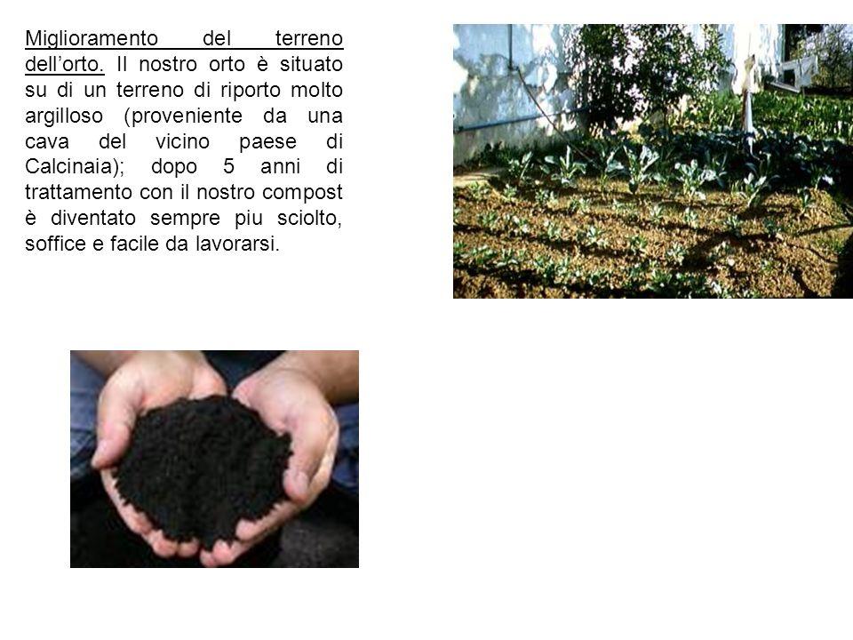 Miglioramento del terreno dellorto. Il nostro orto è situato su di un terreno di riporto molto argilloso (proveniente da una cava del vicino paese di