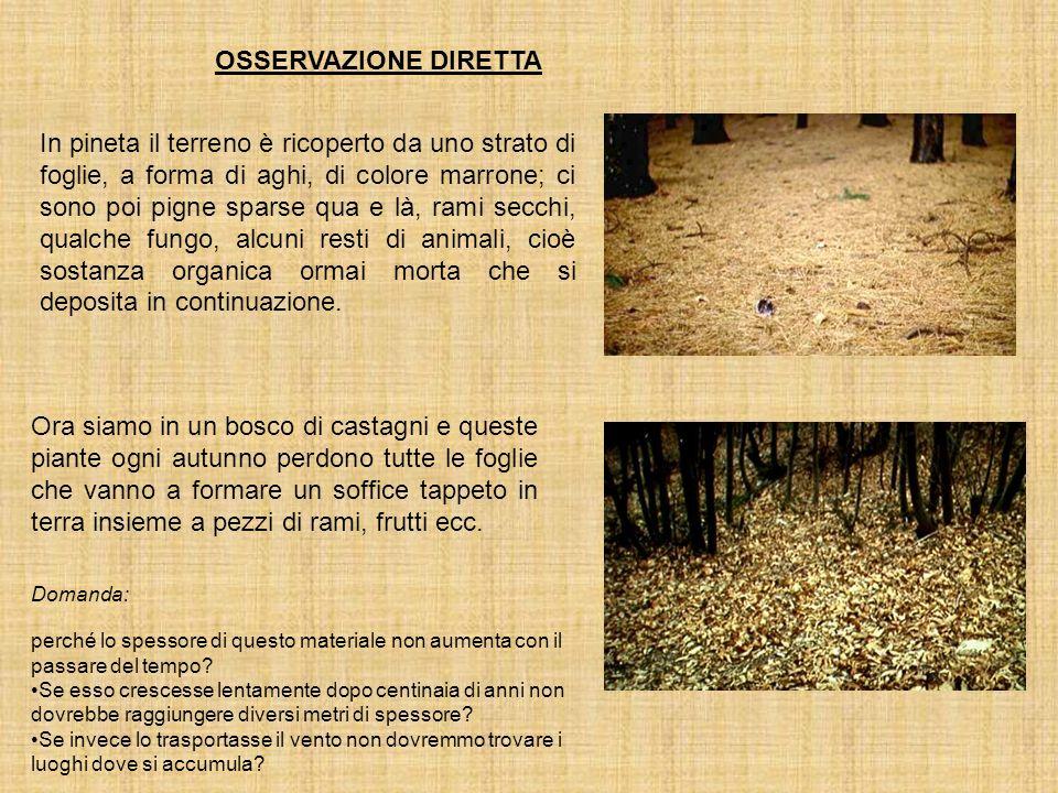 LA SITUAZIONE DEI RIFIUTI INITALIA In Italia quasi la metà dei rifiuti finiscono ancora in discariche non controllate mentre si sa che circa il 30% di essi sono di natura organica e quindi compostabili.