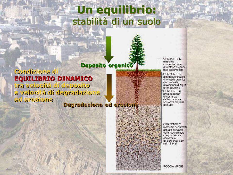Un equilibrio: stabilità di un suolo Deposito organico Degradazione ed erosione Condizione di EQUILIBRIO DINAMICO tra velocità di deposito e velocità