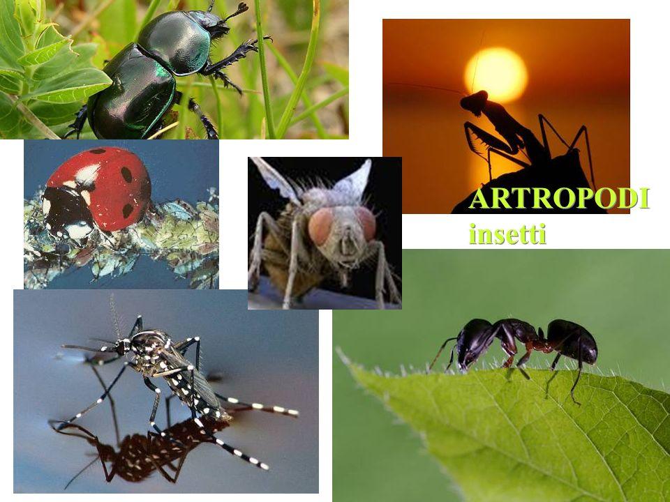 ARTROPODI insetti ARTROPODI insetti